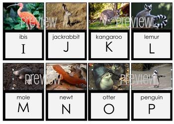 Animal ALPHABET TRADING CARDS FLASH CARDS BUNDLE!!  SAVE 25%
