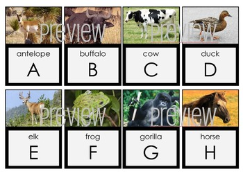 Animal ALPHABET FLASH CARDS Green Set 2