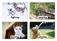 Animal Actions Flashcards with Vocabulary