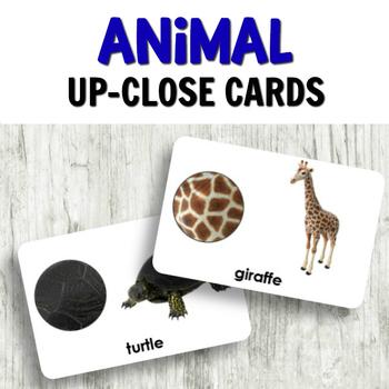 Animal Activities for Kindergarten: Animal Up Close Cards