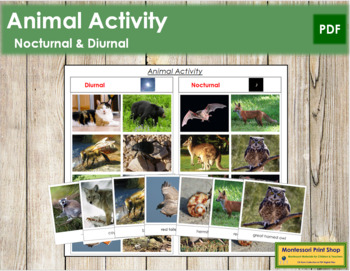 Animal Activity - Nocturnal or Diurnal