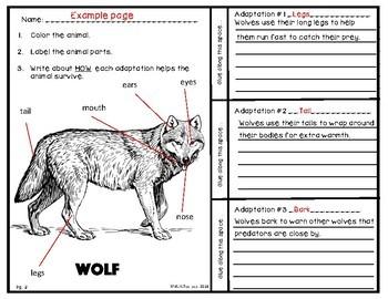 Animal Adaptations
