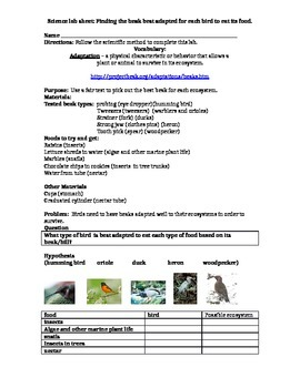 Animal Adaptation Bird Beak lab sheet
