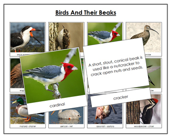Animal Adaptation: Birds and Beaks