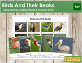 FREE Animal Adaptation: Birds and Their Beaks