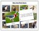 FREE Animal Adaptation: Birds and Their Beaks
