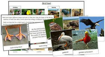 Animal Adaptation: Birds and Feet