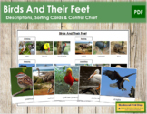 Animal Adaptation: Birds and Feet