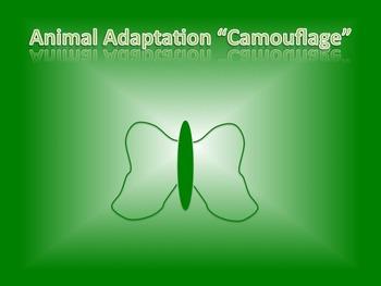 "Animal Adaptation ""Camouflage"""