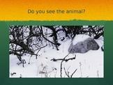 Animal Adaptation Game