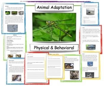 Animal Adaptation Lesson Plan