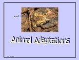 Animal Adaptation Powerpoint