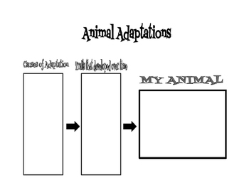 Animal Adaptation Research Graphic Organizer