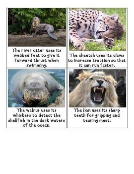 Animal Adaptation Scavenger hunt