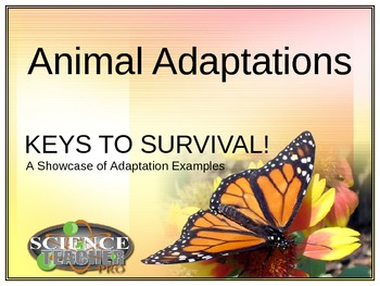 Animal Adaptation Showcase