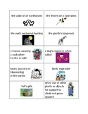 Animal Adaptation Sort