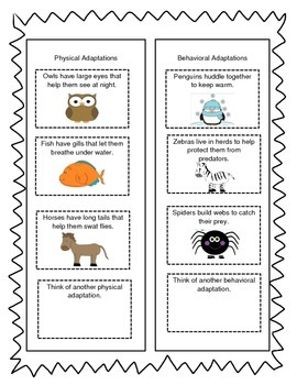 Animal Adaptation Sort - Physical and Behavioral