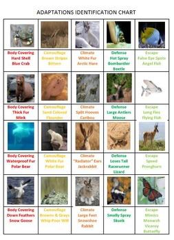 Animal Adaptation Tic Tac Know
