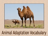 Animal Adaptation Vocabulary