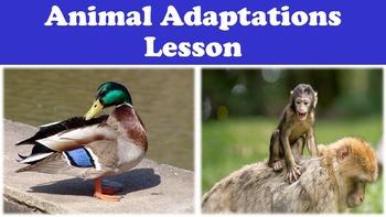 Animal Adaptations Lesson