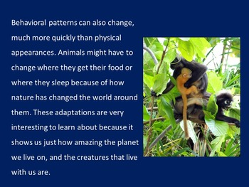 ANIMAL ADAPTATIONS POWERPOINT ACTIVITY