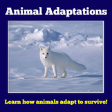 Animal Adaptations PowerPoint | Animals Adaptations Activity
