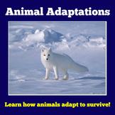 Animal Adaptations | Kindergarten 1st 2nd 3rd 4th Grade |