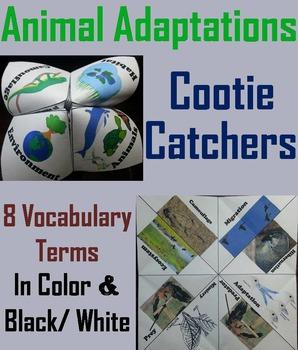 Animal Adaptations Activity: Hibernation, Camouflage, Migr