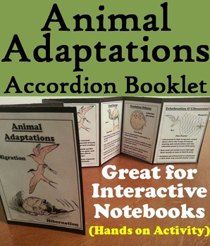 Animal Adaptations Activity (Ecosystem Unit)