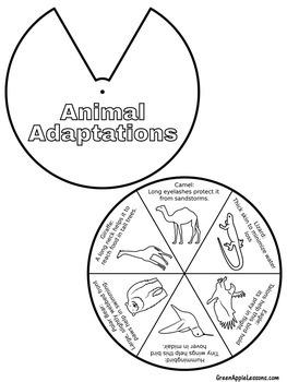 Animal Adaptations Activity