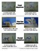 Animal Adaptations Interactive Activities