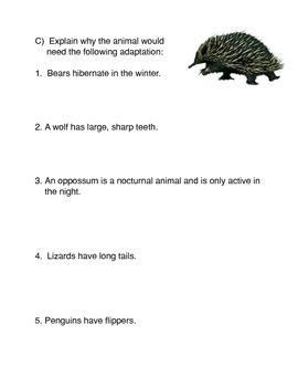 Animal Adaptations Activity