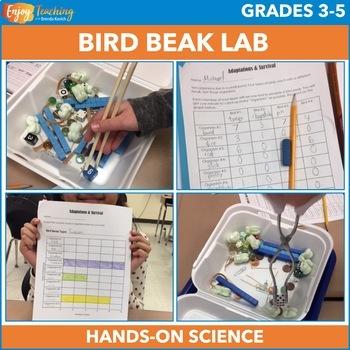 Animal Adaptations Activity - Bird Beak Investigation