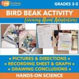 Animal Adaptations Activity - Bird Beak Investigation