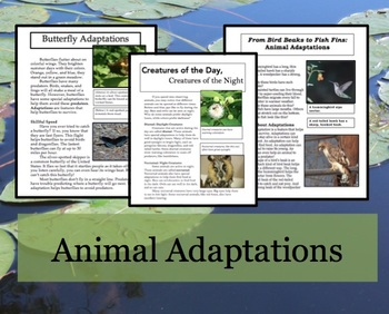 Animal Adaptations Article and Activities
