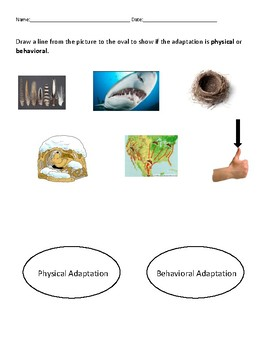 Animal Adaptations Assessment Pack