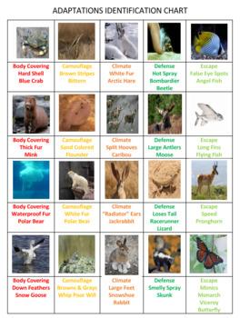 Animal Adaptations Battle