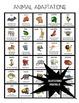 Animal Adaptations Activities