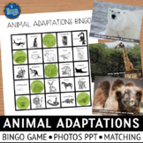 Animal Adaptations Activities