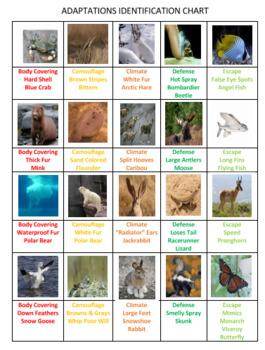 Animal Adaptations Bingo