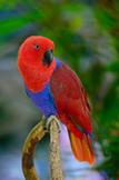 Animal Adaptations – Bird Beak Adaptation Experiment