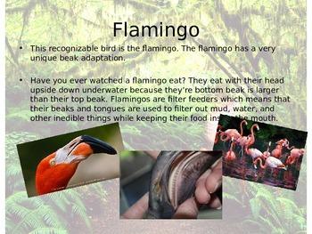 Animal Adaptations - Bird Beaks