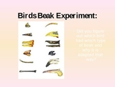 Animal Adaptations: Bird's Beak Conclusion
