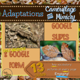 Animal Adaptations: Camouflage & Mimicry, Google Slides, G