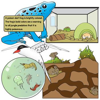 Animal Adaptations Clip Art Bundle