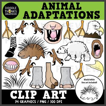 Animal Adaptations Clip Art - SCIENCE