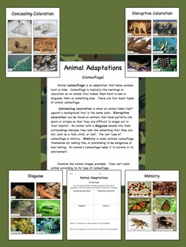 Animals: Complete Set
