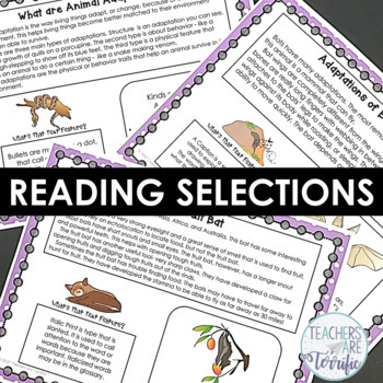 Animal Adaptations Creating a Non-Fiction Text Features Booklet