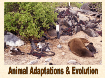 Animal Adaptations & Evolution presentation and student note sheet