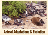 Animal Adaptations & Evolution presentation and student no